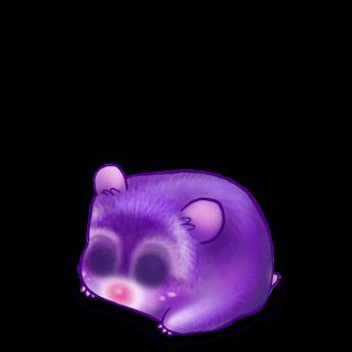 Adopte un(e) Hamster Liz