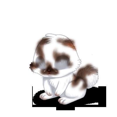 Adopte un(e) Lapin Marron et Blanc
