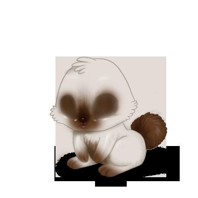 Adopte un(e) Lapin Siamois