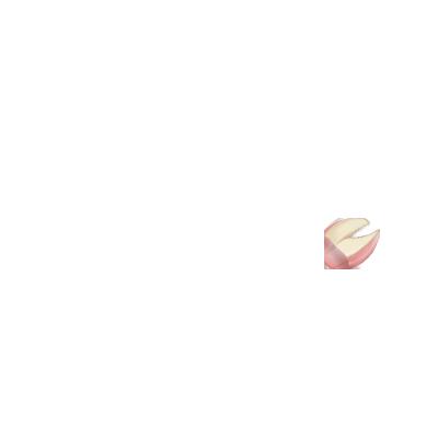 Adopte un(e) Lapin Crème