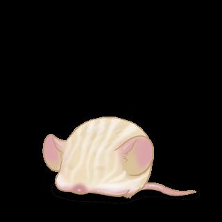 Adopte un(e) Souris Crème