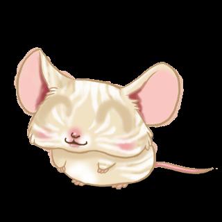 Souris Crème