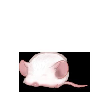 Adopte un(e) Souris Albinos