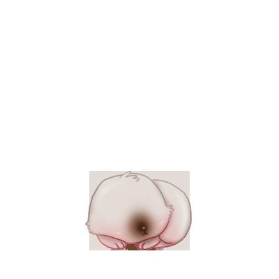 Lapin Marron et Blanc