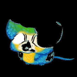 Souris Ara Bleu