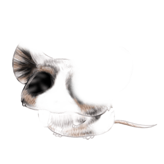Souris Panda Roux