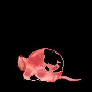 Souris Pêche