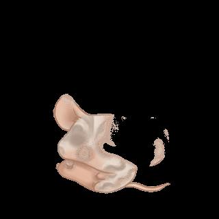 Souris Simba