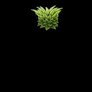 Hamster Ananas