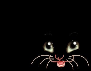 Furet Scratch